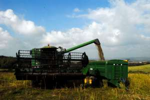 GOOD OIL Harvest 2008